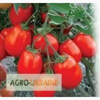 Продам весовые семена томатов (оптом с первых рук от производителя)