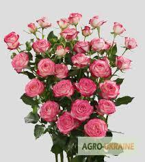 Купить розы оптом киевская заказ цветов в днепроетровске