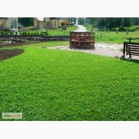 Продам семена однолетних и многолетних трав и сидератов
