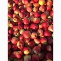 Продам яблука -гала, лігольд, груша, ноябрска !! урожай 2017