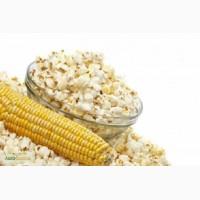 Продам семена кукурузы «Поп-корн»