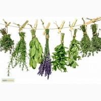 Куплю травы и растения в сухом виде