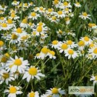 Ромашка лекарственная (цветы) 50 грамм