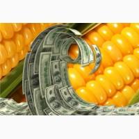 Продам семена трансгенный гибрид кукурузы Канадский трансгенный гибрид HYDRA FF 369