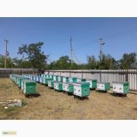 Продам пчелосемьи в количестве 10-15 шт. на матках 2017г
