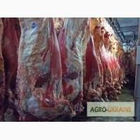 Продам говядину охлажденную оптом, субродукты говяжьи