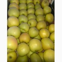Яблуки Сорт Голден Опт