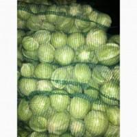 Куплю зелену капусту