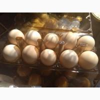Домашні яйця