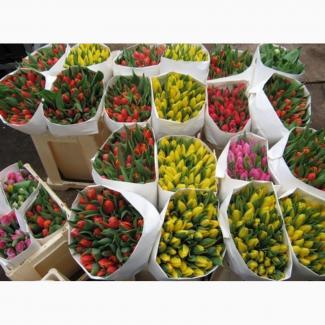 Продам Тюльпани до 8 Марта С Доставкой