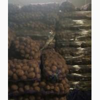 Продам Картошку 2017 Урожая Хазяйство