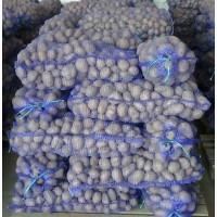 Продам картофель сорт Славянка и Бела росса