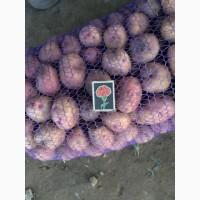 Продам посевной картофель Иван да Марья