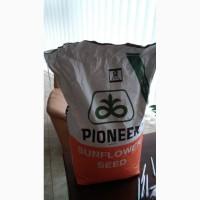 Семена подсолнечника Пионер П64ЛЕ99(P64LE99) Круйзер(17г)