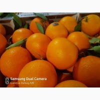 Продам апельсин Испания
