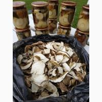 Продам білі сушені та мариновані гриби Преміум якості (сезон 2020)