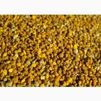 Куплю пыльцу оптом по 75 грн Вся Украина