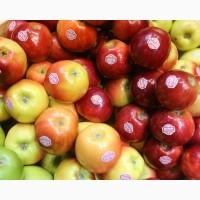 Продам яблука, застосована фреш технологія. Холодильне зберігання Хмельницька обл