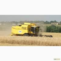 Оказываем услуги по уборке всех видов зерновых культур