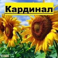 Соняшникове насіння класичного ранньостиглого гібриду «Кардинал» 90дн