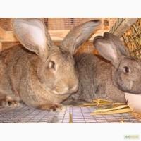 Комбикорм, корм для кроликов в Одессе, откорм, для кролематок, лактирующих