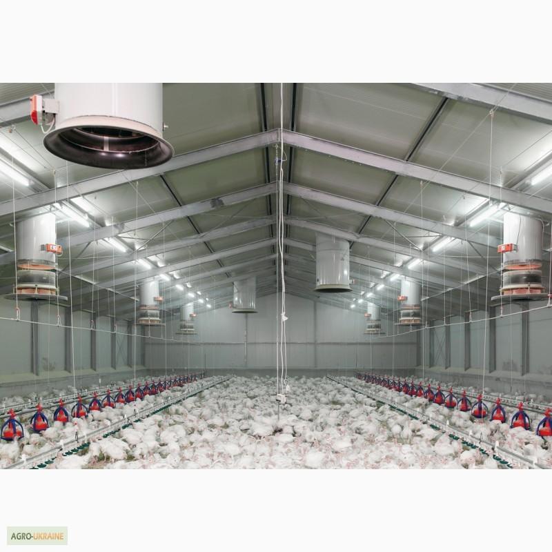выступает производственный контроль на перепелиной ферме для начинающих опытных