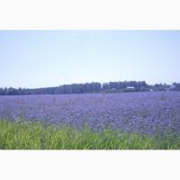 Продам семена Фацелии, многолетних, газонных трав, сидератов