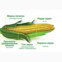 2018 рік Насіння кукурудзи Ізяслав 220 МВ (Маїс) ФАО 220 Кукуруза Маис