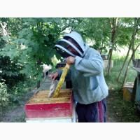 Продам бджолопакети, бджолосімї 25 штук