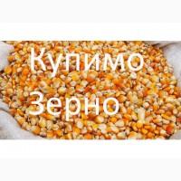 Беремо кукурудзу постійно