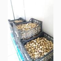 Продаж перепелиних яєць