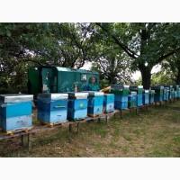Продам мед акаційовий та липовий