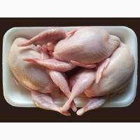 Перепелине мясо, яйце. Опт і роздріб