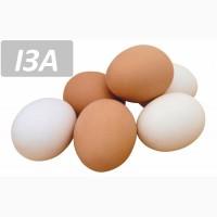 Відбірне яйце
