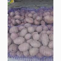 Продам картоплю сорти скарб бріз гала