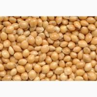 Продаем семена ультра-раннего Проса сорт Белая-альтанка