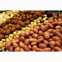 Покупаю картошку харчову та семеную