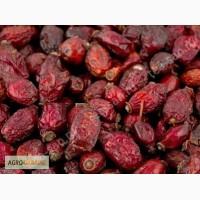 Куплю сушеные плоды шиповника