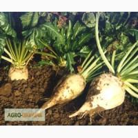 Продам насіння цукрового буряка