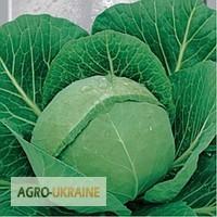 Продам весовые и пакетированные семена капусты (с первых рук, оптом от производителя