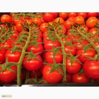 Предлагаем свежий томат шерри из Испании оптом