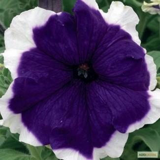 Продам семена Петуния крупноцветковая Фрост Модра F1