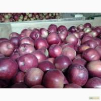 Продам зимнее яблоко разных сортов