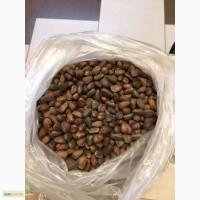 Продам кедровые орехи