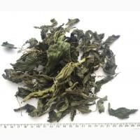 Продам Крапива двудомная лист (лат. Urtíca dióica)