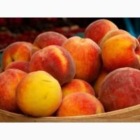 Продам саженцы плодовых и декоративных деревьев от 45 грн