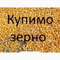Дорого і постійно кукурудза