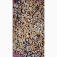 Куплю зерновые и масличные культуры дорого