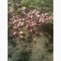 Продам Подбор яблук