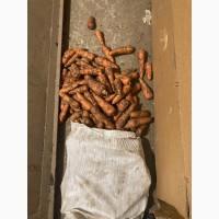Продам морковь, 2сорт